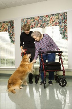 Elderly woman with therapy dog.