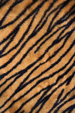 Tiger print carpet.
