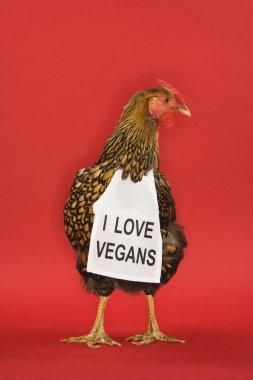 Chicken wearing funny vegan sign.
