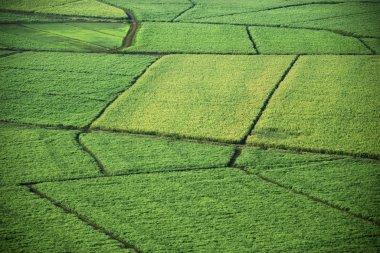 Aerial of crop fields.