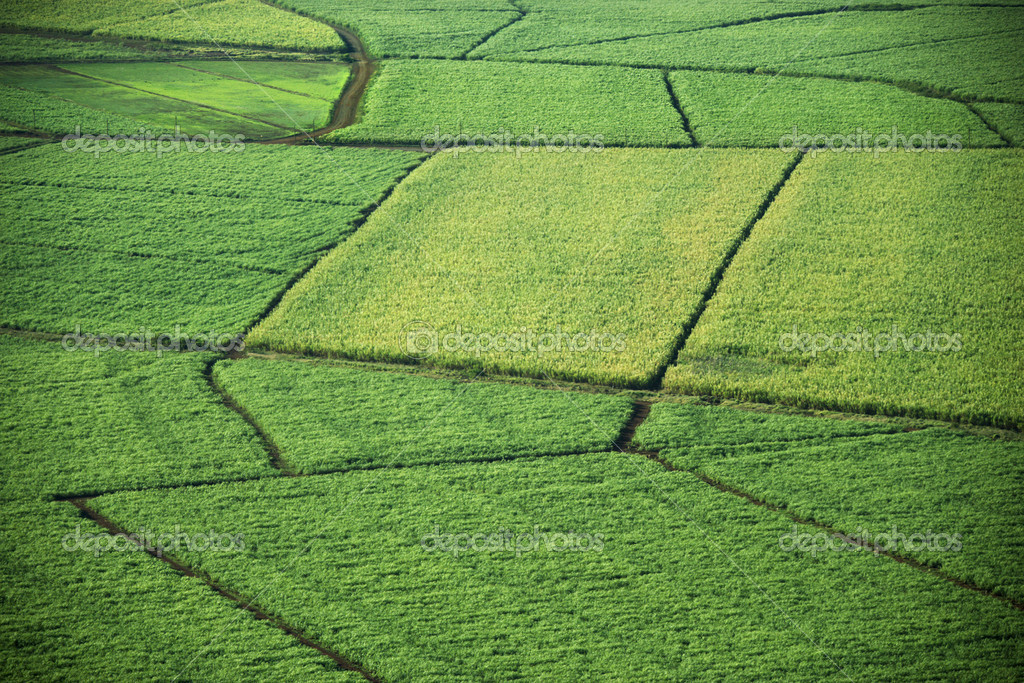 Aerial of crop fields.