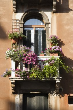 Balcony and Flowers