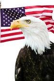 Fotografie Weißkopfseeadler mit amerikanischer Flagge