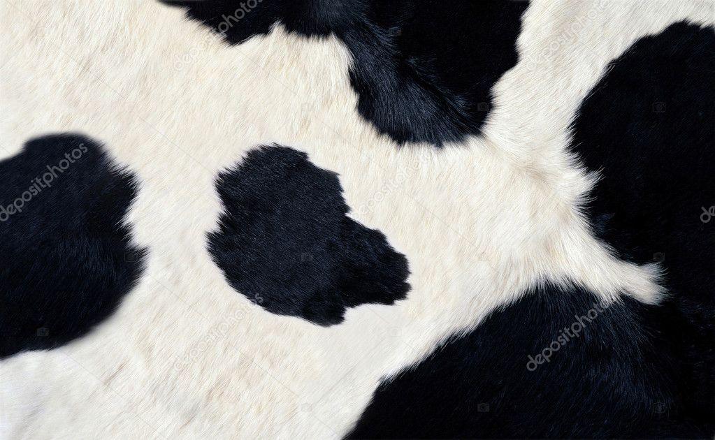couro vaca muito preto e branco — Fotografias de Stock ...