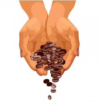 Coffee beans are falling down from two hands