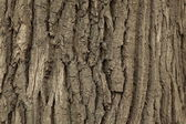 Texture of wood.