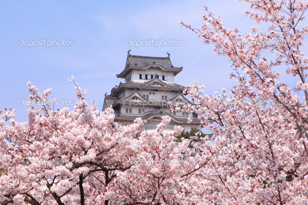 Japanese castle and Beautiful pink cherry blossom