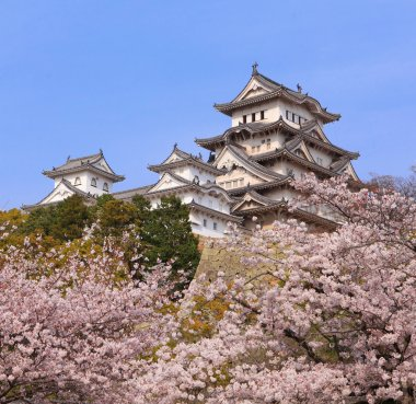 Japanese castle and Beautiful pink cherry blossom shot in japan