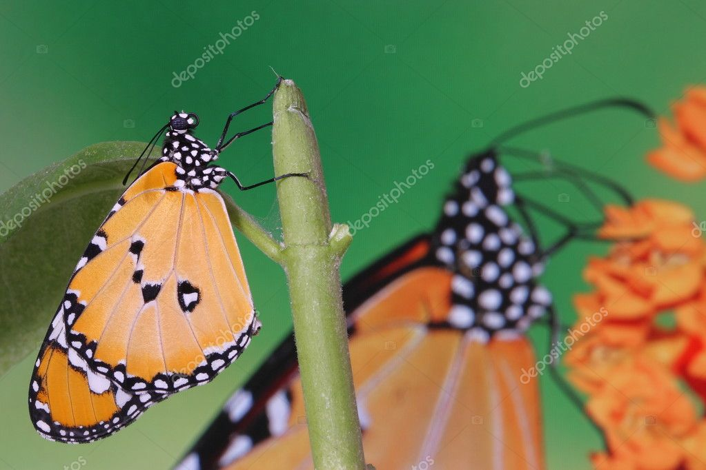 Splendid and beautiful butterfly r