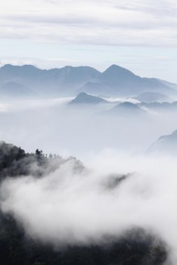 Mountains with trees and fog in monochrome color