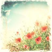 Fotografia fiori di papavero rosso
