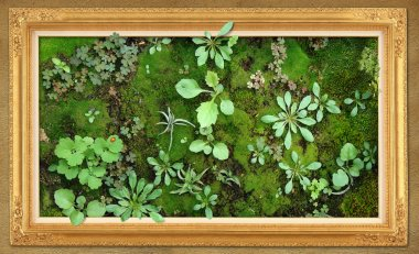 Micro world vegetable kingdom