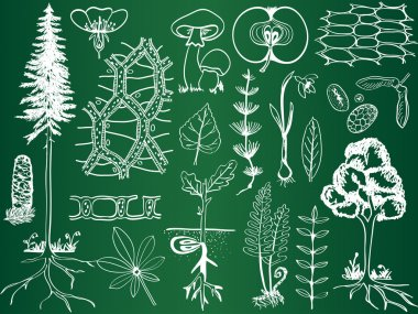 Biology plant sketches on school board - botany illustration