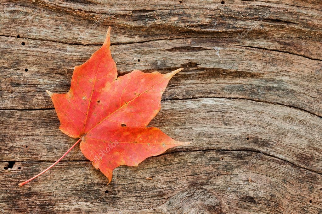 Wood grain curves around maple leaf