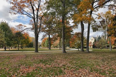 Neighborhood scene with fall colors
