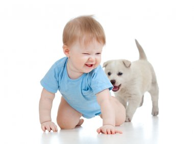 Cute child playing and crawling away a puppy, puppy following