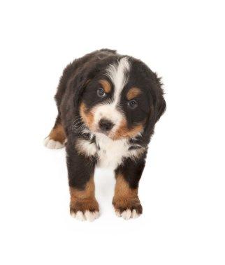 Doggy eyes