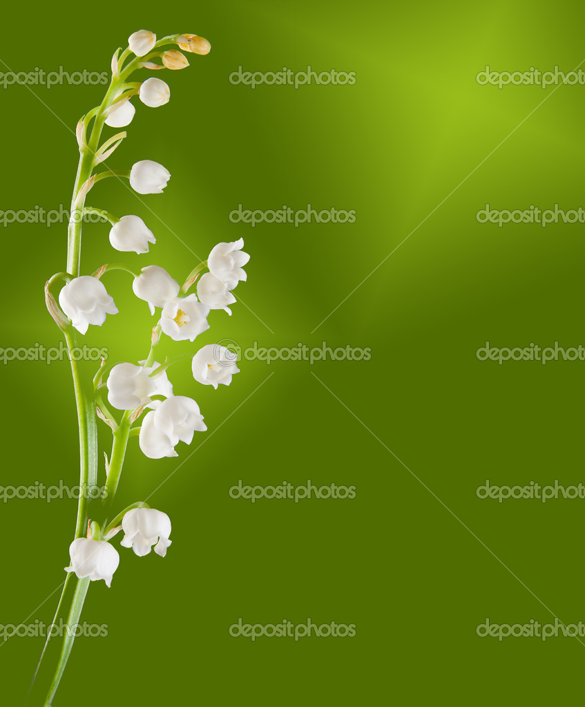 Lily-of-the-valley twig