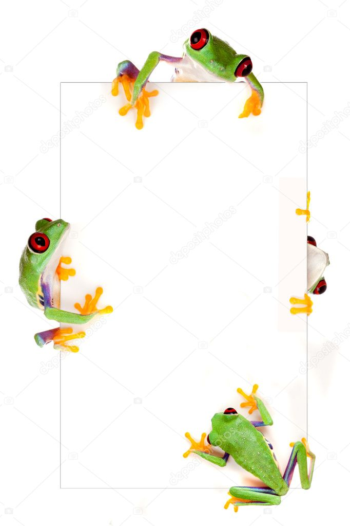 marco de rana — Fotos de Stock © Klanneke #9139767