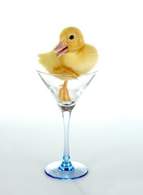 Ducky in a glass