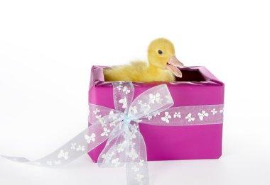 Duck surprise