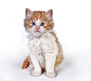 Painted kitten
