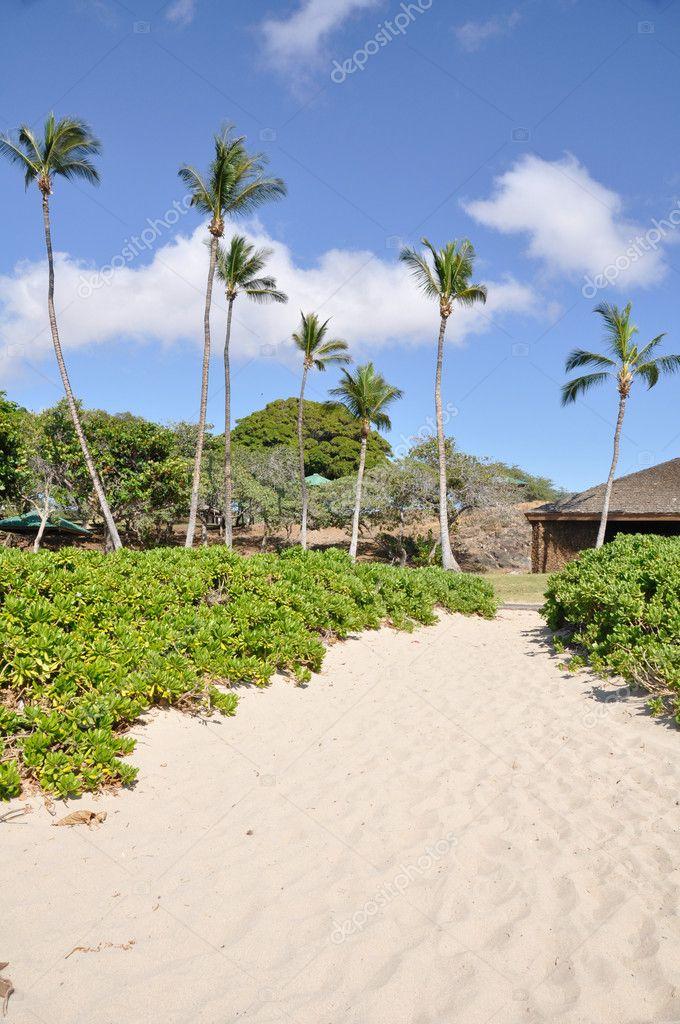 Hapuna Beach State Park Hawaii S Big Island Stock Photo