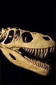 Fotografie Dinosaur kostra