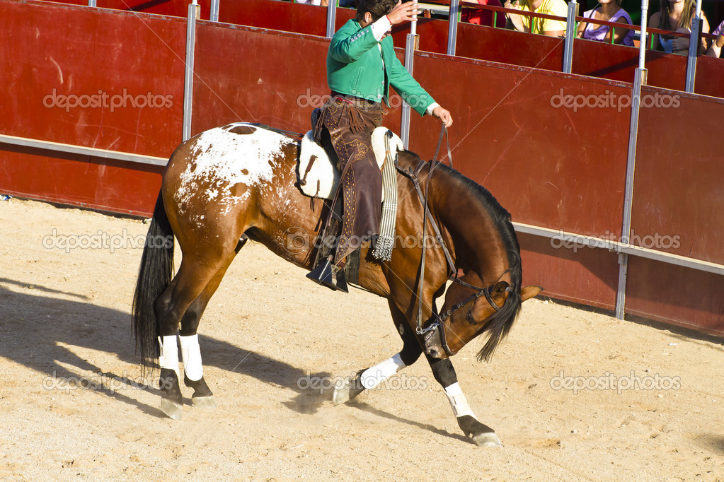 Stierkampf Pferd