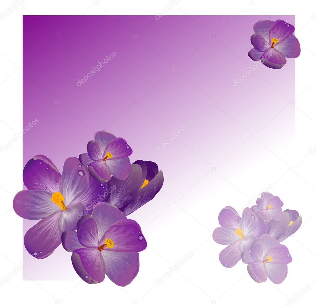 Purple spring flowers with green leaves of clover