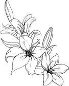 vektoros illusztráció: liliom a fekete és fehér színben.