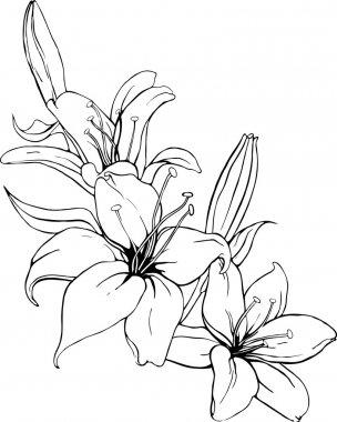 """Картина, постер, плакат, фотообои """"векторная иллюстрация лилии в черно-белых тонах окрашивает."""", артикул 9206012"""
