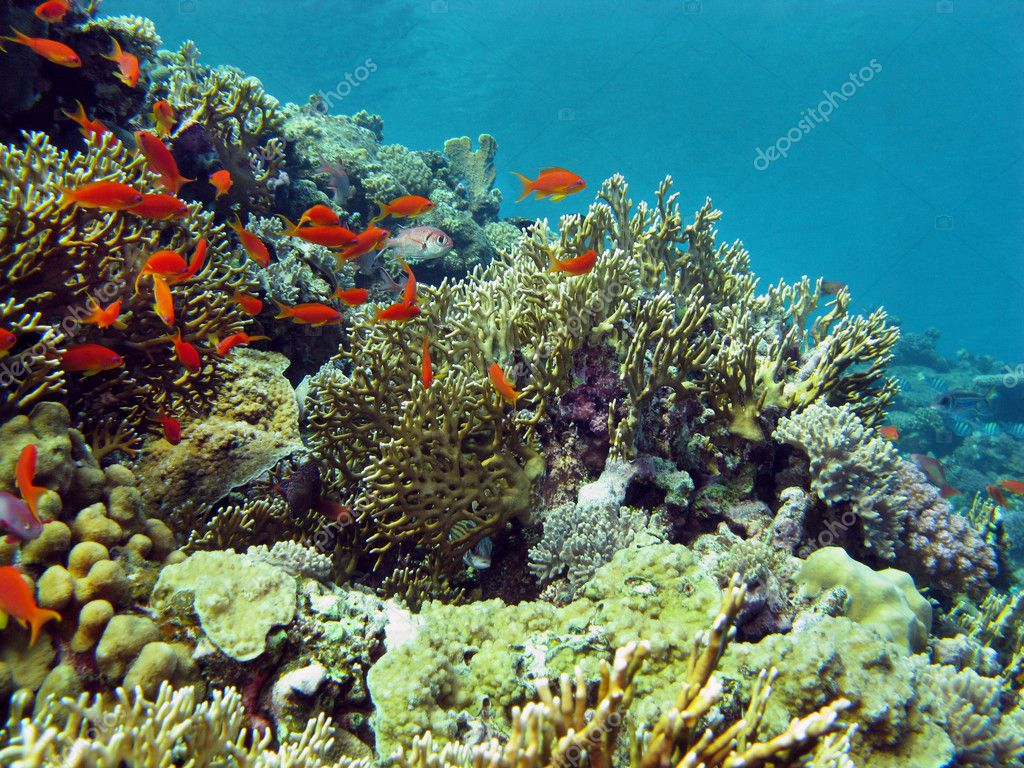 Coral Reef On The Bottom Of Red Sea Stock Photo C Mychadre77