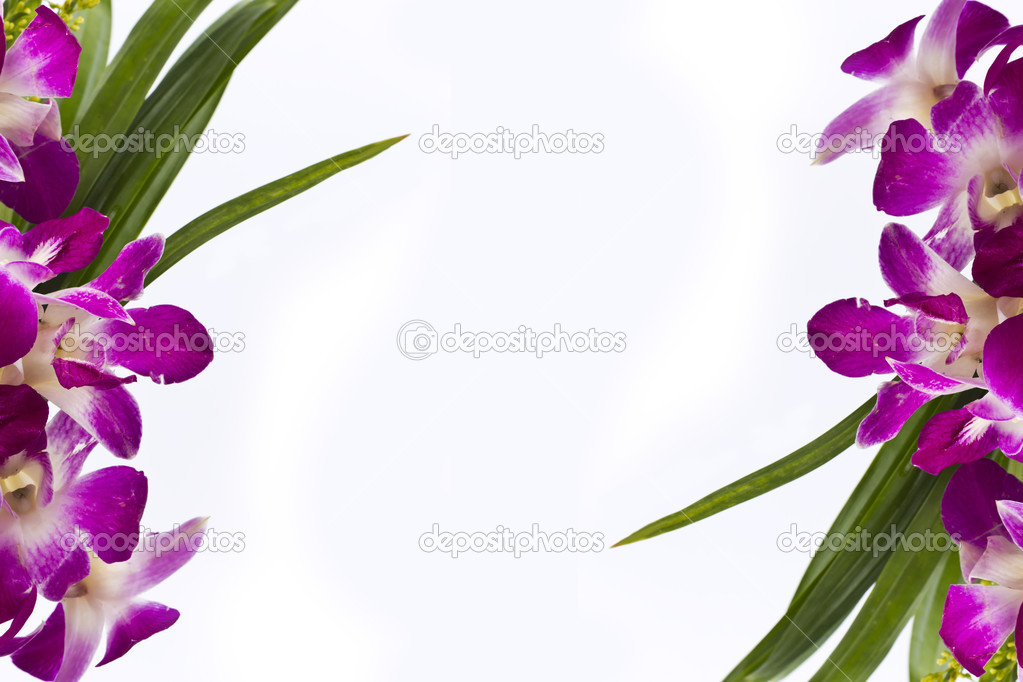 Purple orchid frame border isolated on white background.