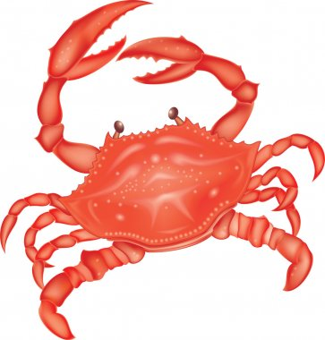 Sea red crab
