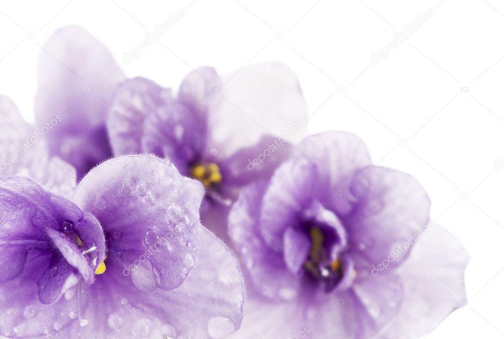 Обои grass, nature, фиалки, природа, травы, цветы, flowers, violet ... | 687x1023