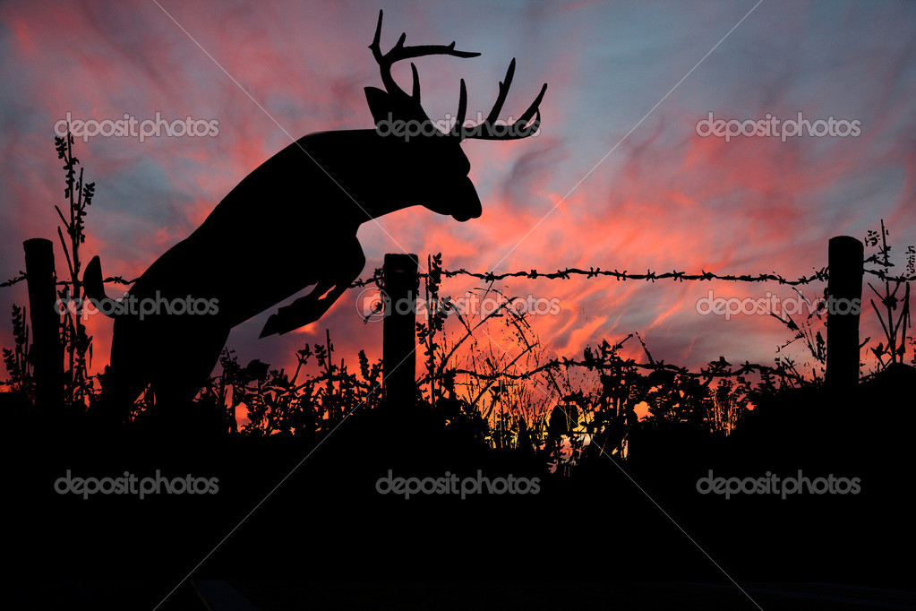 Buck Jumping Barbed Wire Fence at Sunset