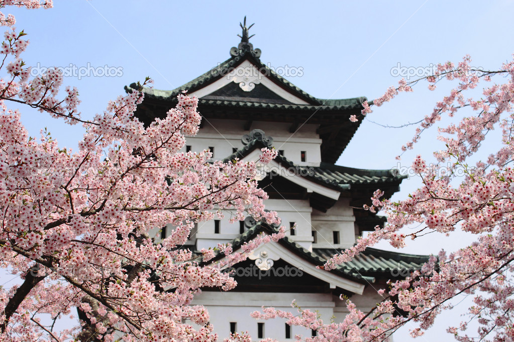 Cherry blossoms and Japanese castle