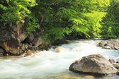flusso e verde fresco