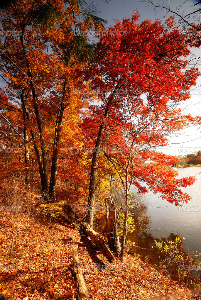 A Fall Woods - New England