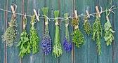 Fotografie Herbs on line