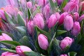 Kytice z čerstvých tulipánů na bílém pozadí