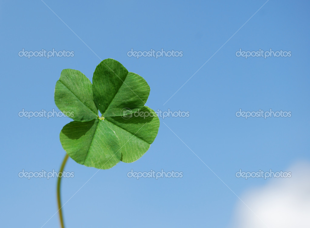 Four leaf clover and sky