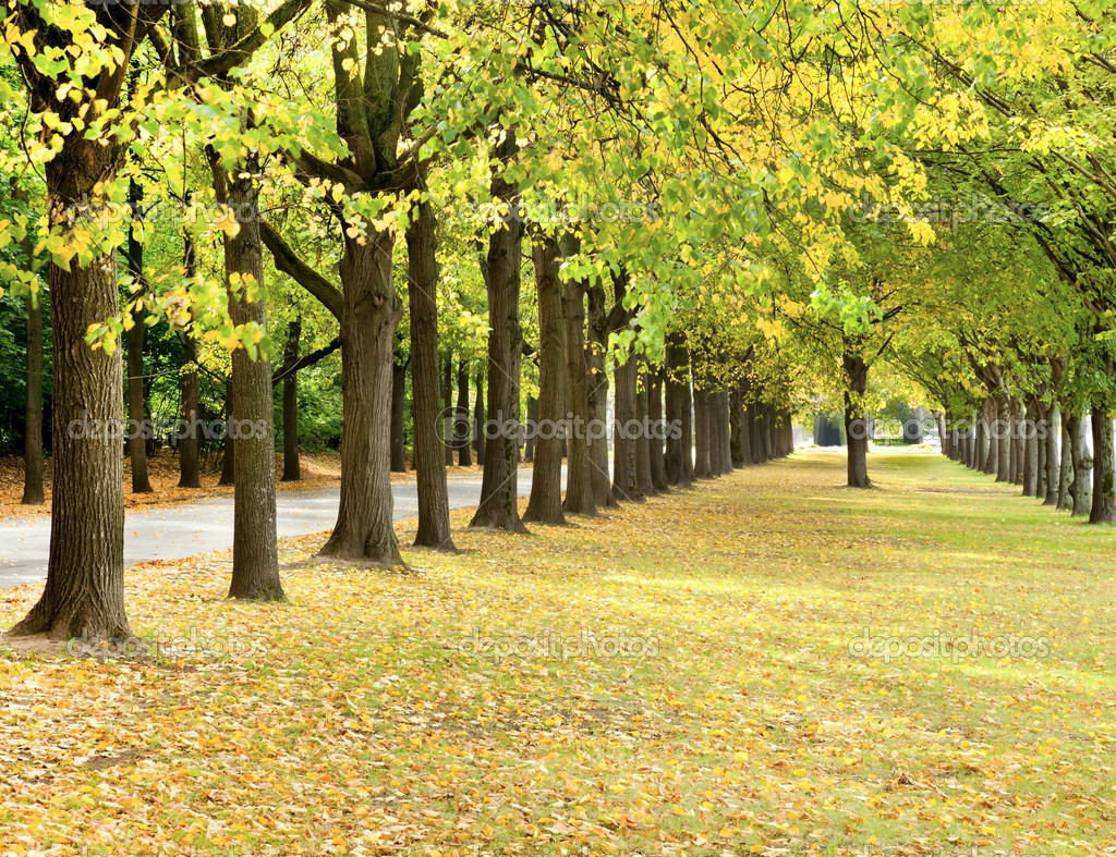 Autumn trees line in a park