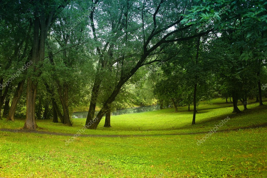 Wood glade and river