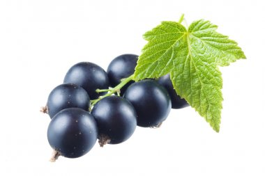 Black currant with leaf isolated