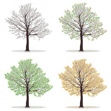 Four seasons trees