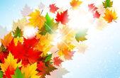 Fotografie zářivé podzimní javorový list pozadí