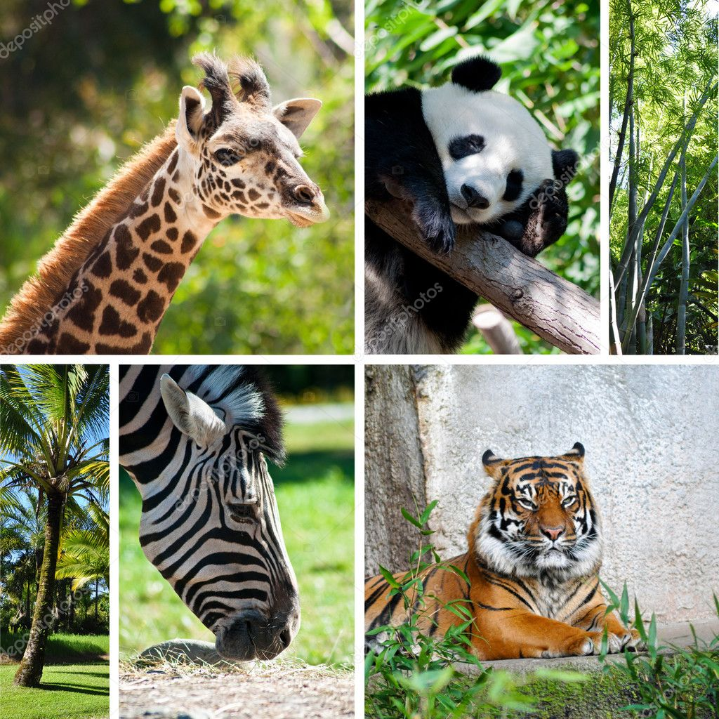 Zoo collage with six photos