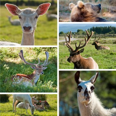 Game farm zoo collage